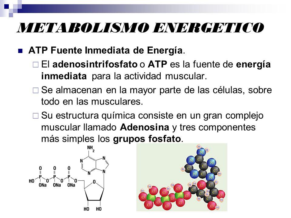 METABOLISMO ENERGETICO ATP Fuente Inmediata de Energía. El adenosintrifosfato o ATP es la fuente de energía inmediata para la actividad muscular. Se a