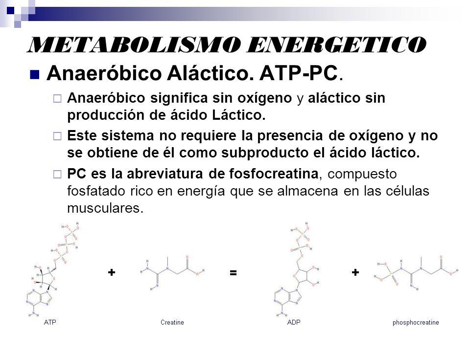 METABOLISMO ENERGETICO Anaeróbico Aláctico. ATP-PC. Anaeróbico significa sin oxígeno y aláctico sin producción de ácido Láctico. Este sistema no requi