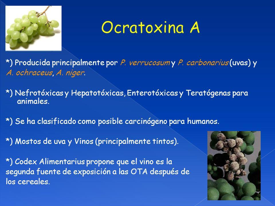*) Producida principalmente por P.verrucosum y P.