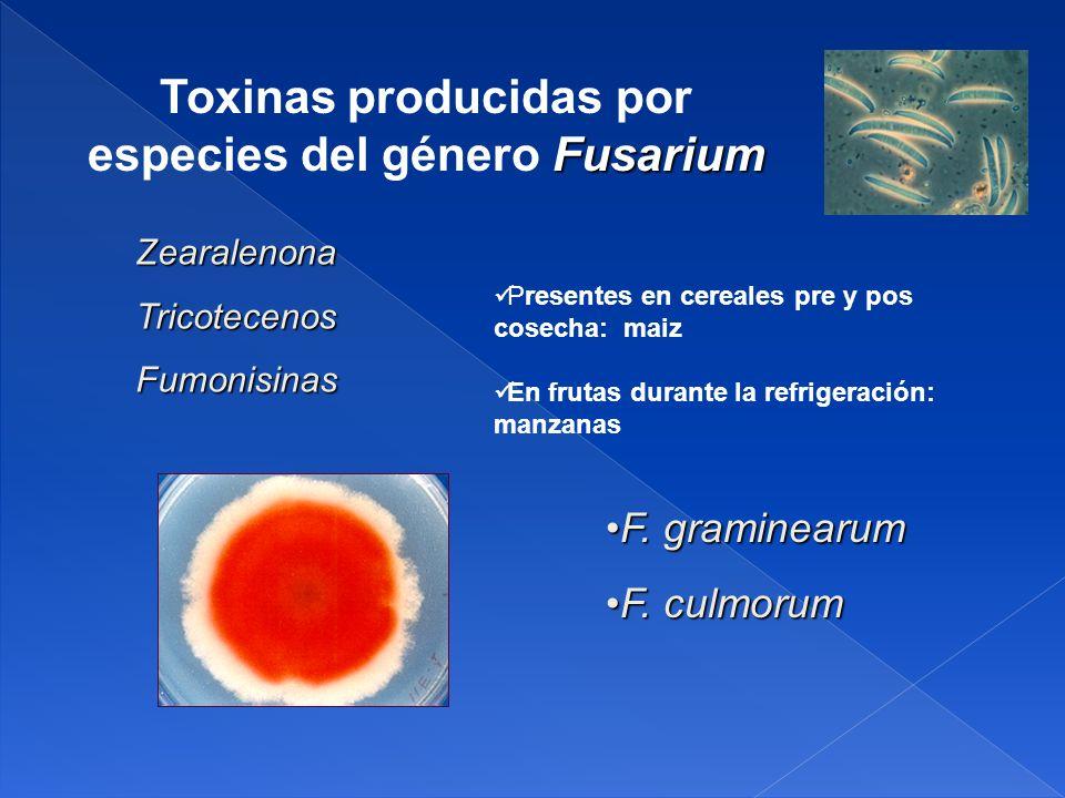 F.graminearumF. graminearum F. culmorumF.