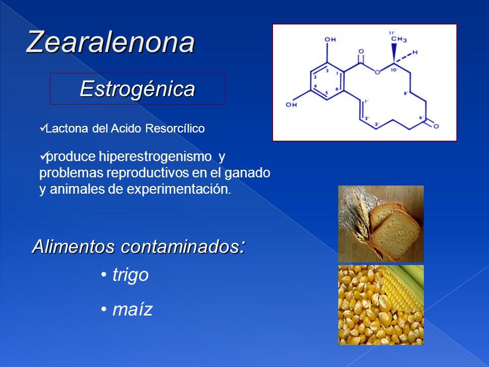 Zearalenona Estrogénica Alimentos contaminados : trigo maíz produce hiperestrogenismo y problemas reproductivos en el ganado y animales de experimentación.