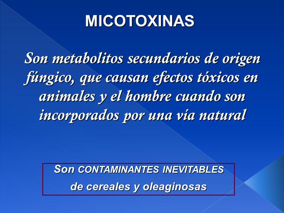 Son metabolitos secundarios de origen fúngico, que causan efectos tóxicos en animales y el hombre cuando son incorporados por una vía natural MICOTOXINAS Son CONTAMINANTES INEVITABLES de cereales y oleaginosas
