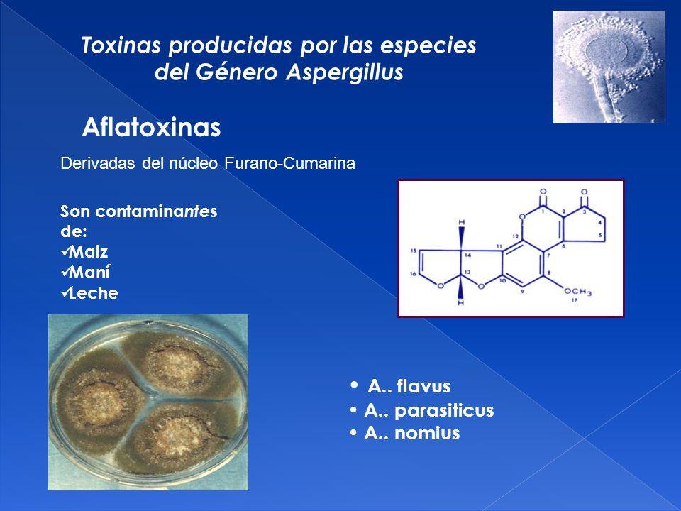 Toxinas producidas por las especies del Género Aspergillus A..