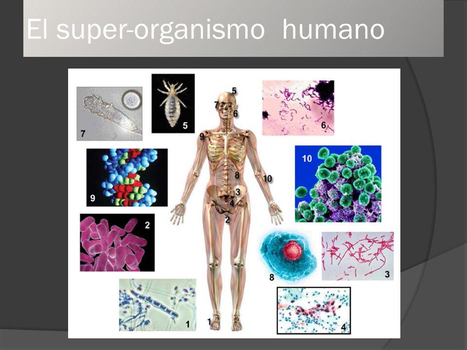 El super-organismo humano