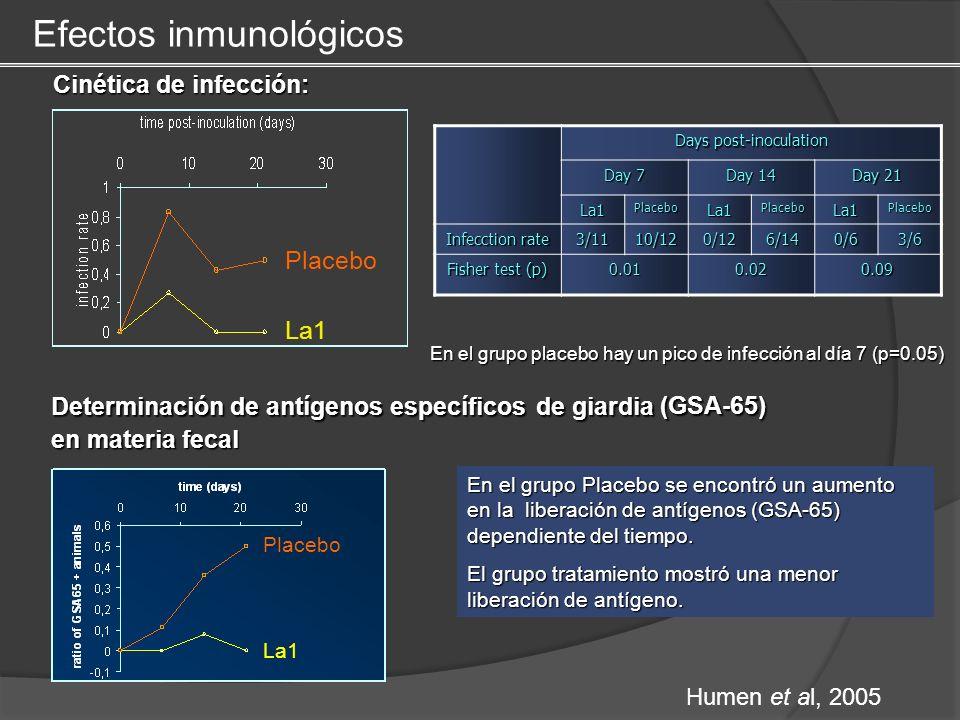 Cinética de infección: La1 Placebo En el grupo placebo hay un pico de infección al día 7 (p=0.05) Days post-inoculation Day 7 Day 14 Day 21 La1Placebo