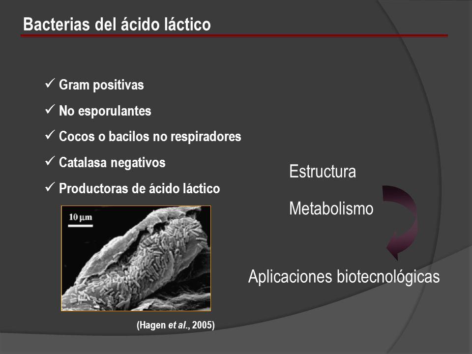 Bacterias del ácido láctico Gram positivas No esporulantes Cocos o bacilos no respiradores Catalasa negativos Productoras de ácido láctico (Hagen et a