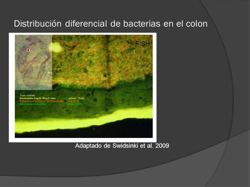Distribución diferencial de bacterias en el colon Adaptado de Swidsinki et al. 2009 FISH