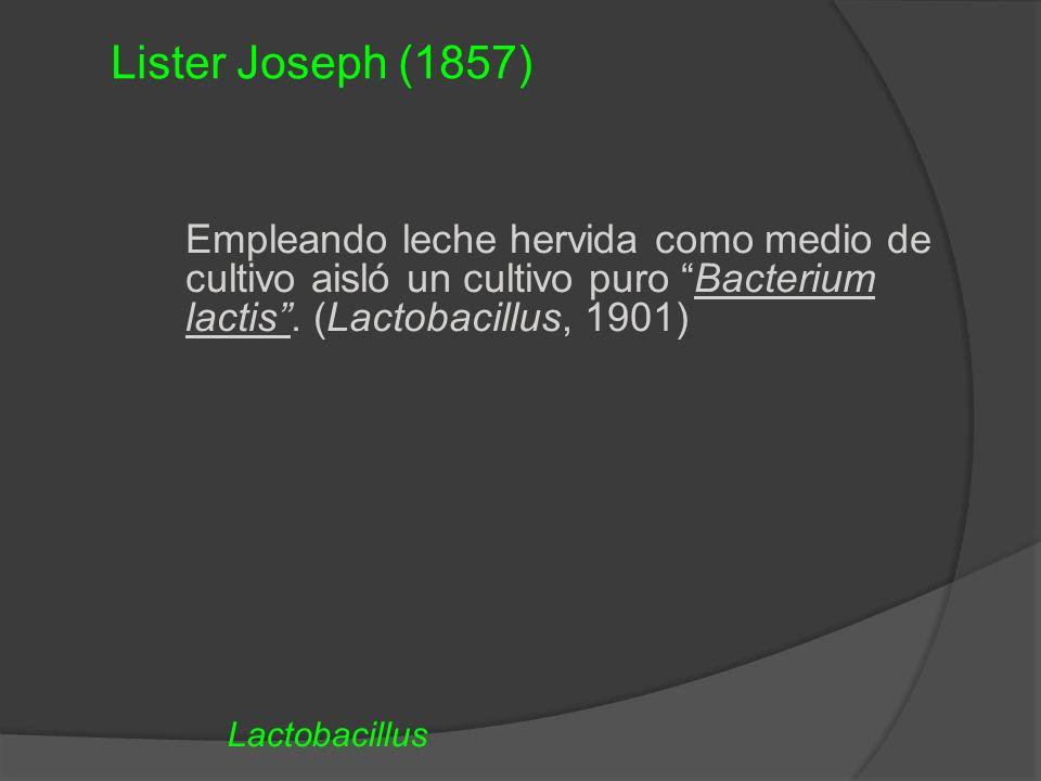 Empleando leche hervida como medio de cultivo aisló un cultivo puro Bacterium lactis. (Lactobacillus, 1901) Lactobacillus Lister Joseph (1857)