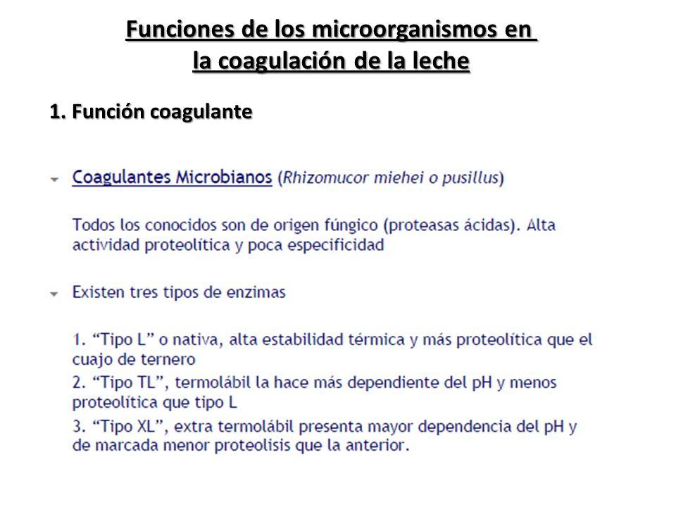 Funciones de los microorganismos en la coagulación de la leche 1. Función coagulante