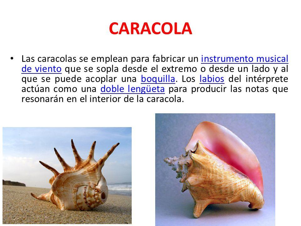 CARACOLA Las caracolas se emplean para fabricar un instrumento musical de viento que se sopla desde el extremo o desde un lado y al que se puede acopl