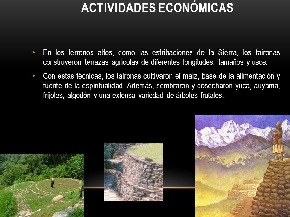 ACTIVIDADES ECONÓMICAS En los terrenos altos, como las estribaciones de la Sierra, los taironas construyeron terrazas agrícolas de diferentes longitudes, tamaños y usos.