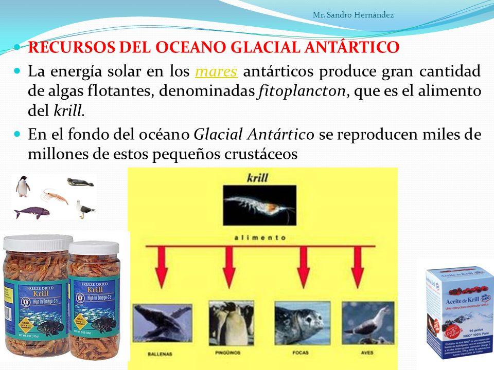 RECURSOS DEL OCEANO GLACIAL ANTÁRTICO La energía solar en los mares antárticos produce gran cantidad de algas flotantes, denominadas fitoplancton, que es el alimento del krill.mares En el fondo del océano Glacial Antártico se reproducen miles de millones de estos pequeños crustáceos Mr.
