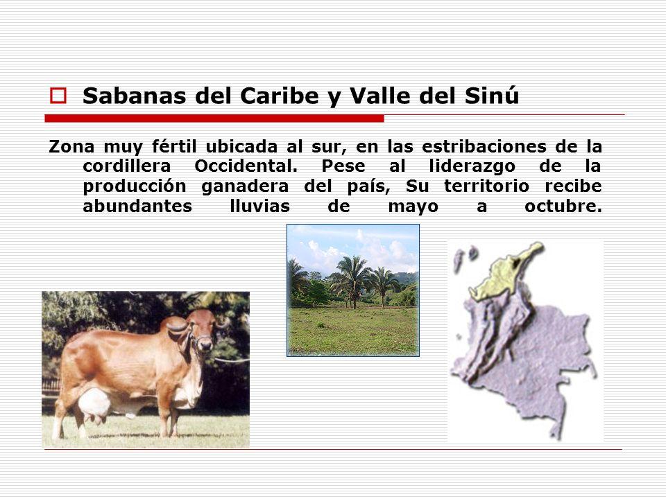 Sabanas del Caribe y Valle del Sinú Zona muy fértil ubicada al sur, en las estribaciones de la cordillera Occidental. Pese al liderazgo de la producci