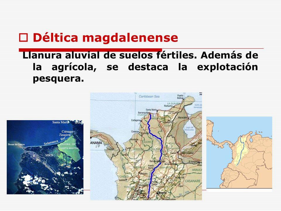 Déltica magdalenense Llanura aluvial de suelos fértiles. Además de la agrícola, se destaca la explotación pesquera.