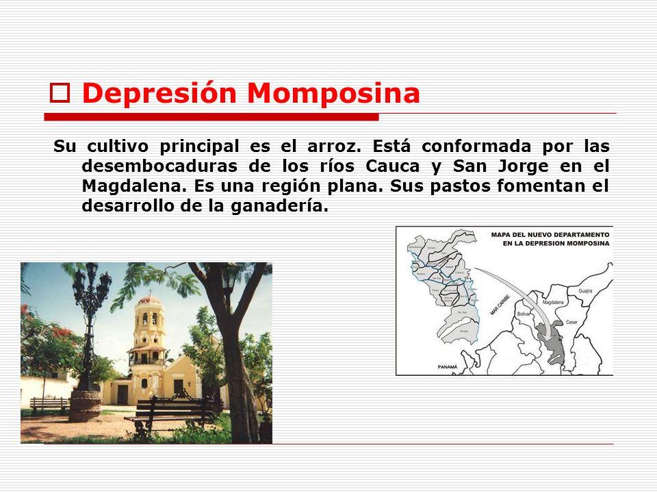 Depresión Momposina Su cultivo principal es el arroz. Está conformada por las desembocaduras de los ríos Cauca y San Jorge en el Magdalena. Es una reg