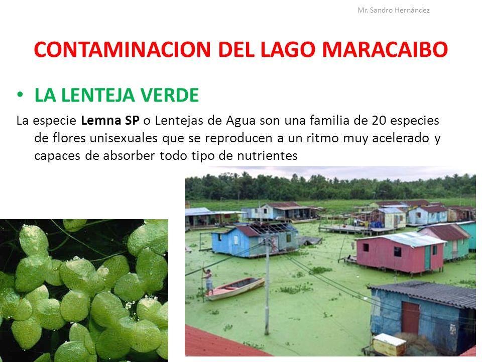 lemna en maracaibo: