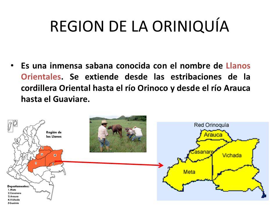 REGION DE LA ORINIQUÍA Es una inmensa sabana conocida con el nombre de Llanos Orientales. Se extiende desde las estribaciones de la cordillera Orienta