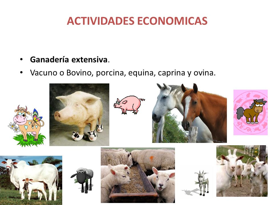 ACTIVIDADES ECONOMICAS Ganadería extensiva. Vacuno o Bovino, porcina, equina, caprina y ovina.