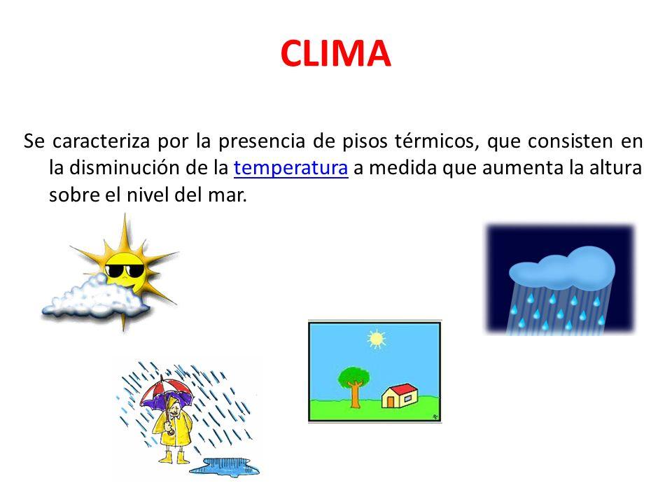 CLIMA Se caracteriza por la presencia de pisos térmicos, que consisten en la disminución de la temperatura a medida que aumenta la altura sobre el niv
