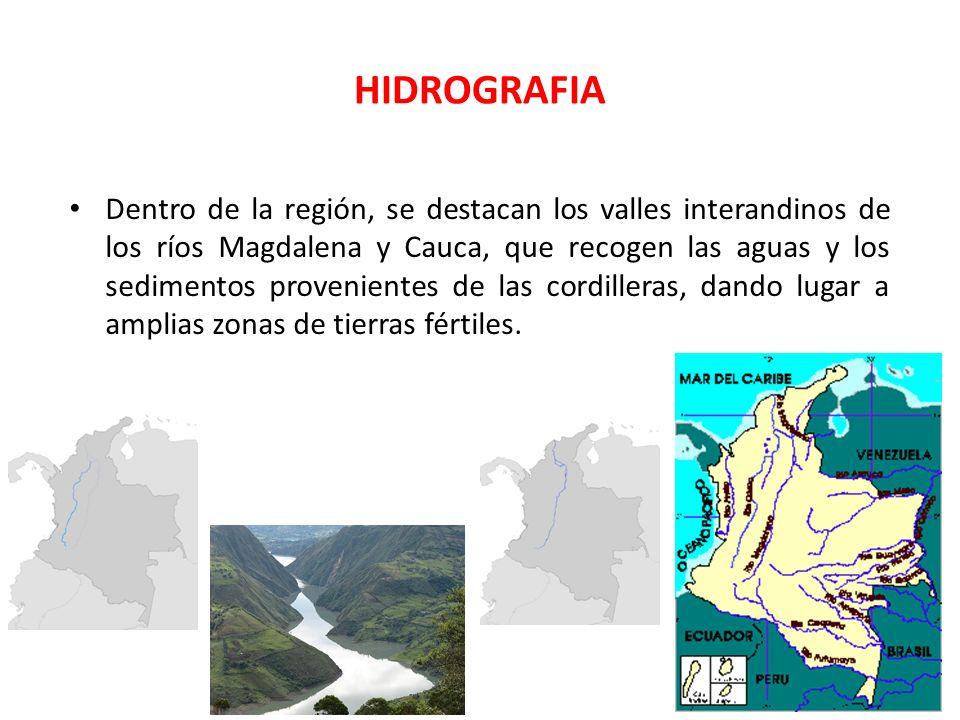 HIDROGRAFIA Dentro de la región, se destacan los valles interandinos de los ríos Magdalena y Cauca, que recogen las aguas y los sedimentos proveniente