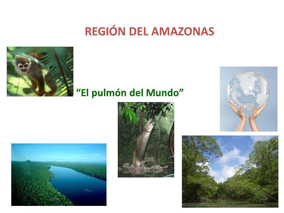 AMAZONAS Está enmarcada por la cordillera de los Andes al occidente y se extiende hacia el oriente hasta los límites con el Brasil y Venezuela; de norte a sur se extiende desde el río Guaviare hasta el Putumayo y el Amazonas.