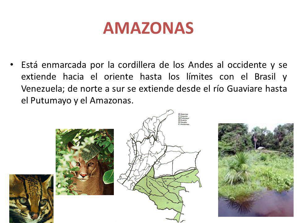 AMAZONAS Está enmarcada por la cordillera de los Andes al occidente y se extiende hacia el oriente hasta los límites con el Brasil y Venezuela; de nor