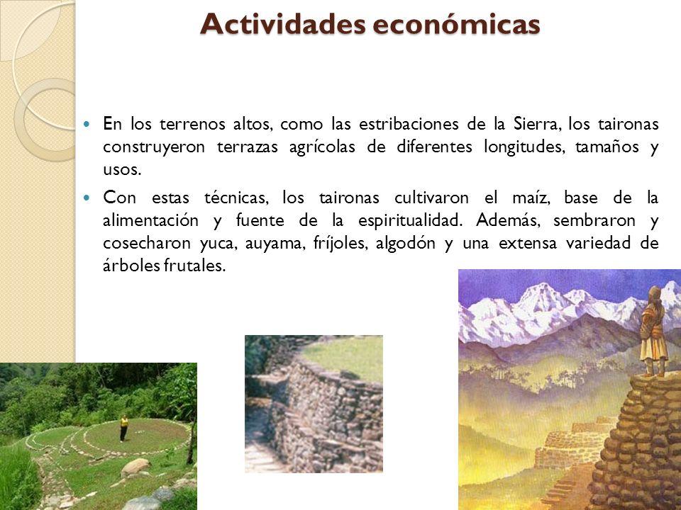 Actividades económicas En los terrenos altos, como las estribaciones de la Sierra, los taironas construyeron terrazas agrícolas de diferentes longitud