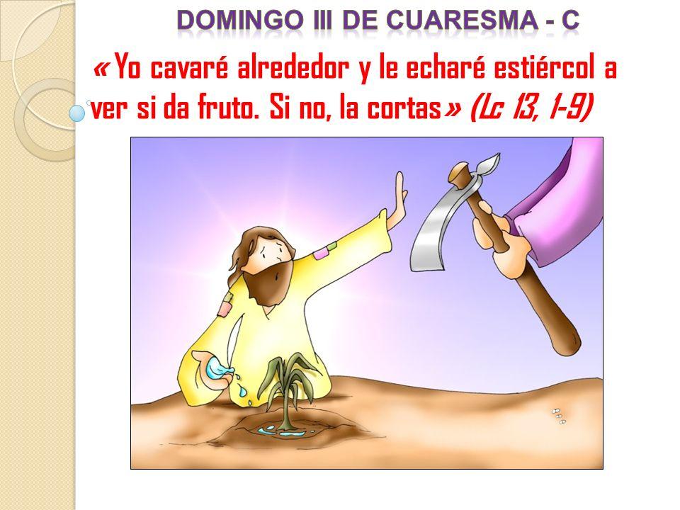 « Yo cavaré alrededor y le echaré estiércol a ver si da fruto. Si no, la cortas» (Lc 13, 1-9)