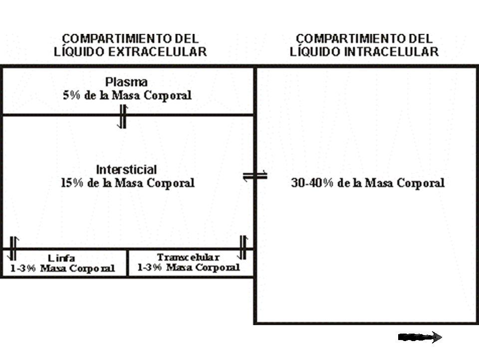 ÓSMOSIS Se manifiesta sólo en presencia de una membrana semipermeable.