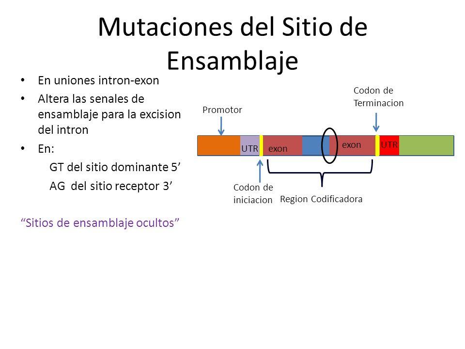 Secuencia DNA pueden producir copias de si mismas Inserción de copias en otras localizaciones cromosómicas Elementos móviles Produce cambio del marco de lectura Inserción de transposones