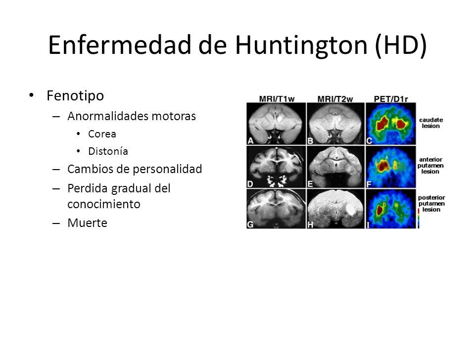 Distrofia Miotónica (DM) Expansión inestable – CTG (3 UTR) – Repeticiones >50 (nl 5-30) – Gen DMPK Gralm.