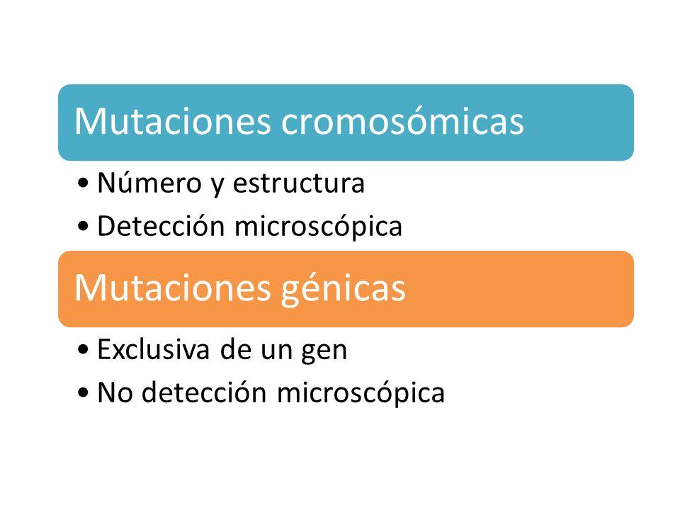 Mutaciones Genicas SustitucionesDeleciones e InsercionesDuplicacionesMutaciones en el sitio de ensamblajeInserción de transposonesRepeticiones expandidas