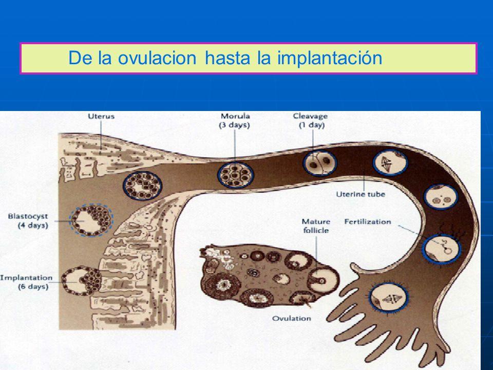 De la ovulacion hasta la implantación