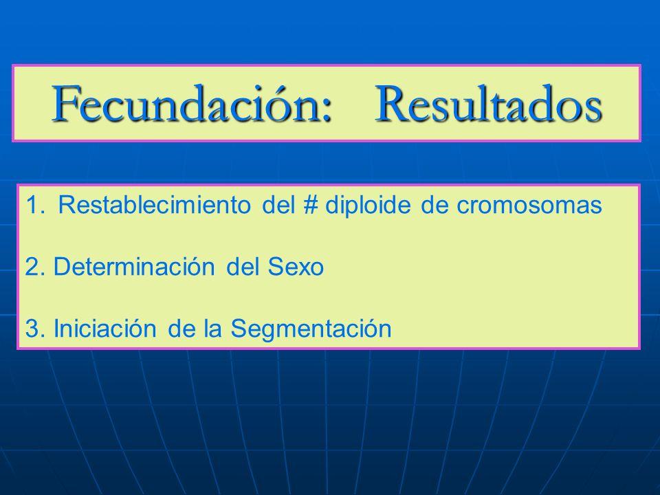 Fecundación: Resultados 1.Restablecimiento del # diploide de cromosomas 2. Determinación del Sexo 3. Iniciación de la Segmentación