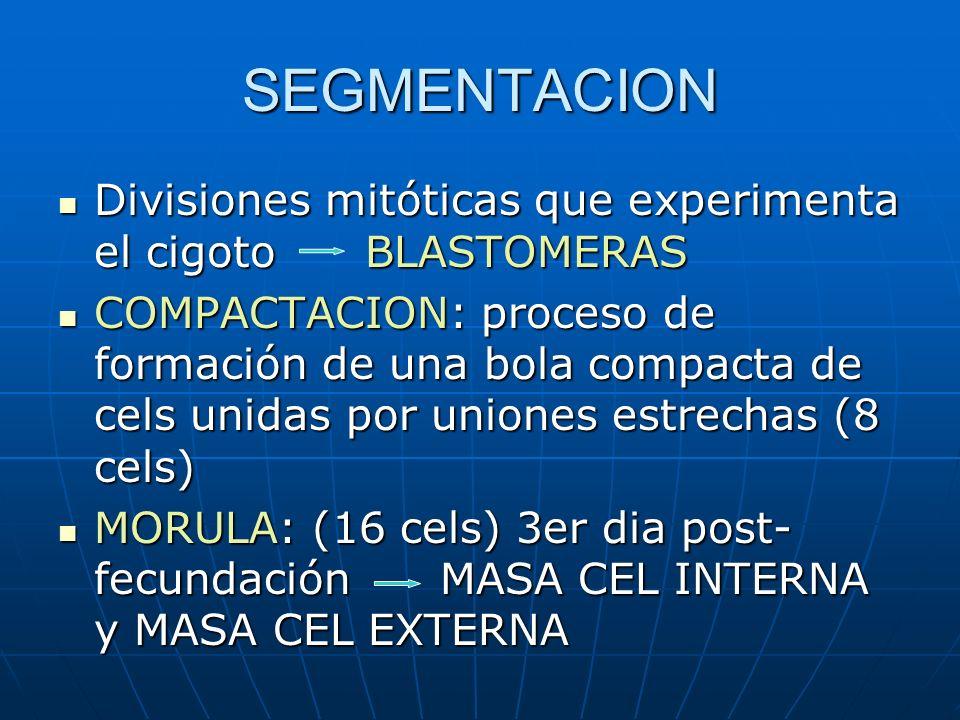 SEGMENTACION Divisiones mitóticas que experimenta el cigoto BLASTOMERAS Divisiones mitóticas que experimenta el cigoto BLASTOMERAS COMPACTACION: proce