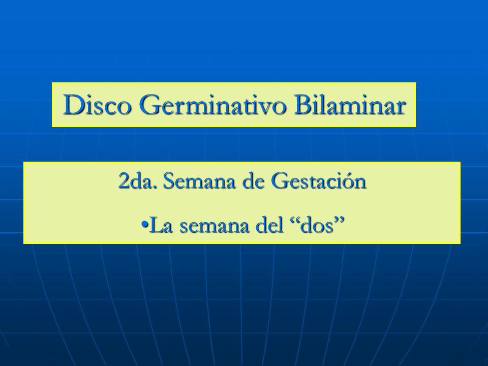 Disco Germinativo Bilaminar 2da. Semana de Gestación La semana del dosLa semana del dos