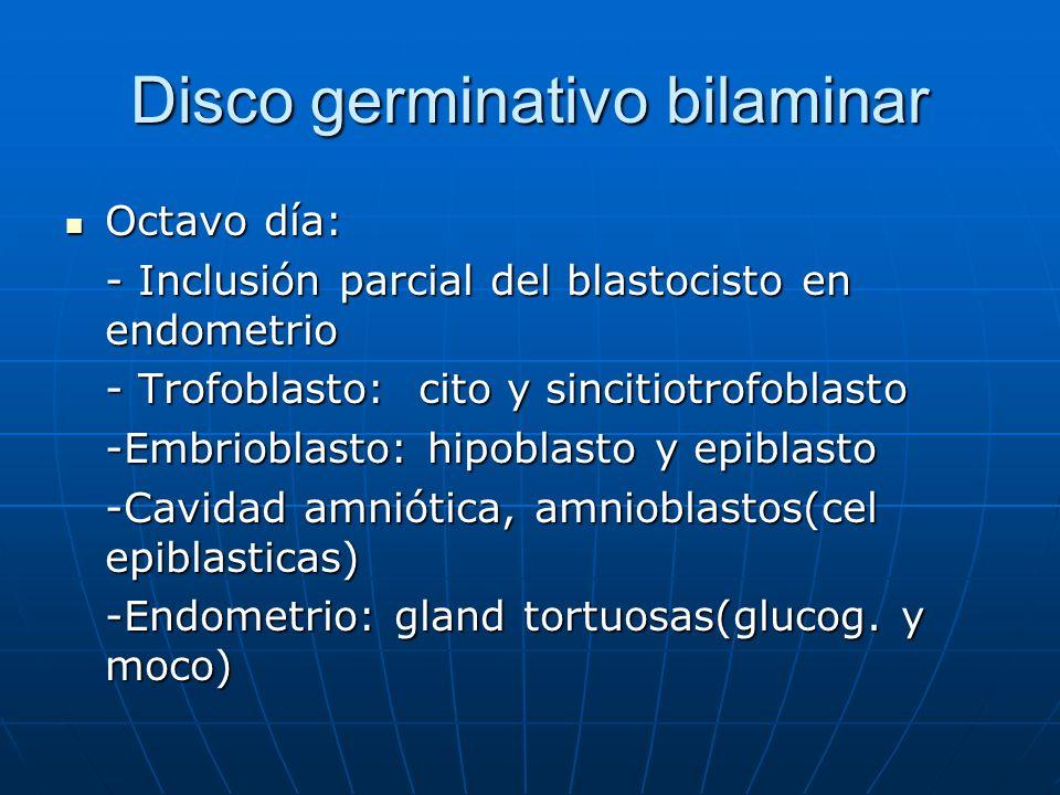 Disco germinativo bilaminar Octavo día: Octavo día: - Inclusión parcial del blastocisto en endometrio - Trofoblasto: cito y sincitiotrofoblasto -Embri