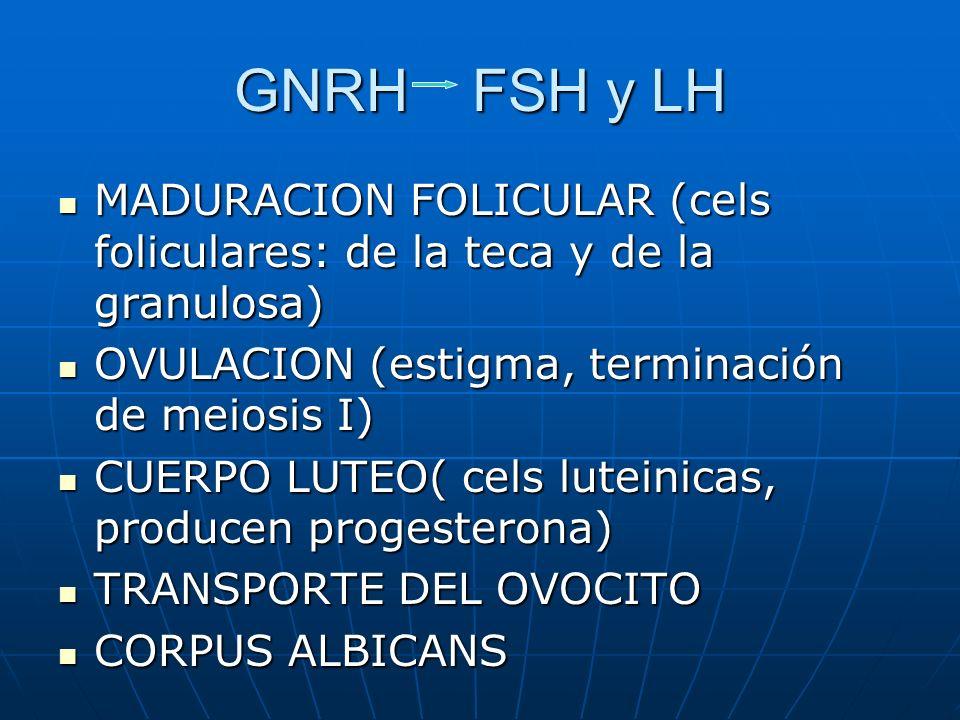 GNRH FSH y LH MADURACION FOLICULAR (cels foliculares: de la teca y de la granulosa) MADURACION FOLICULAR (cels foliculares: de la teca y de la granulo