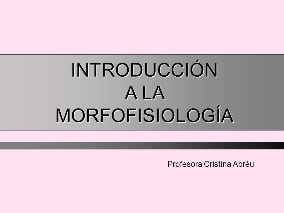 Profesora Cristina Abréu INTRODUCCIÓN A LA MORFOFISIOLOGÍA