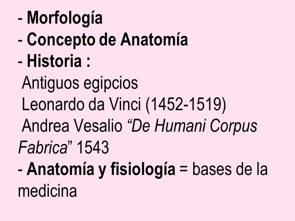 - Morfología - Concepto de Anatomía - Historia : Antiguos egipcios Leonardo da Vinci (1452-1519) Andrea Vesalio De Humani Corpus Fabrica 1543 - Anatom