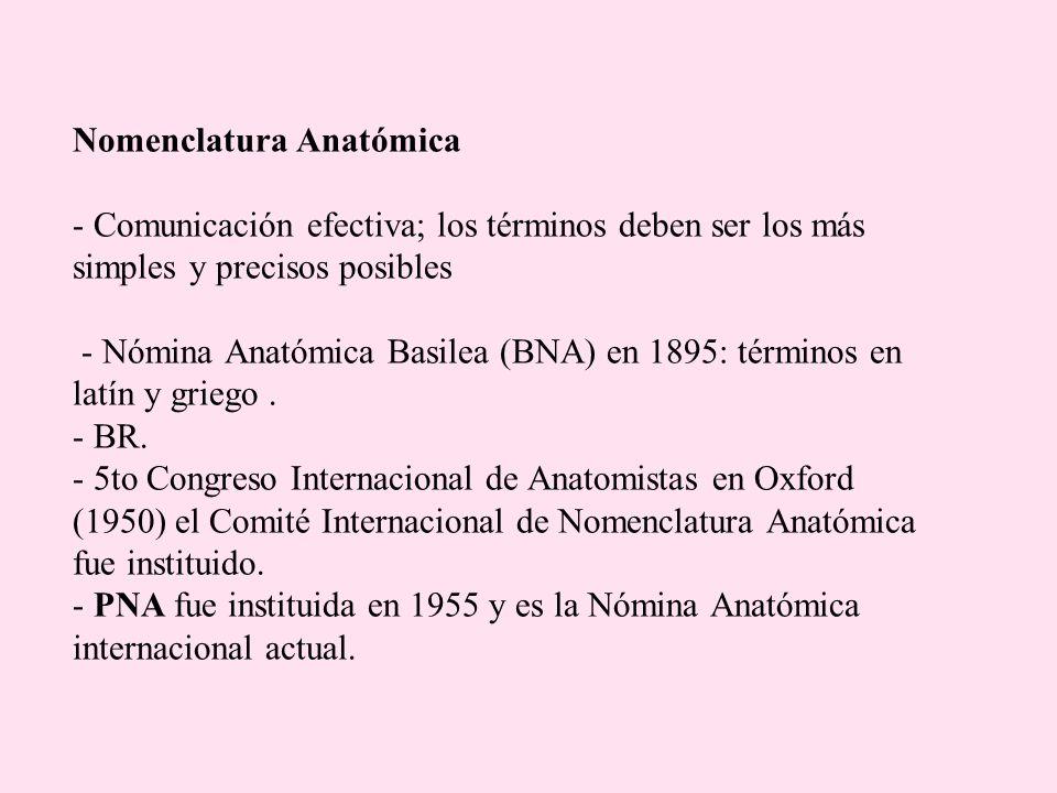 Nomenclatura Anatómica - Comunicación efectiva; los términos deben ser los más simples y precisos posibles - Nómina Anatómica Basilea (BNA) en 1895: t