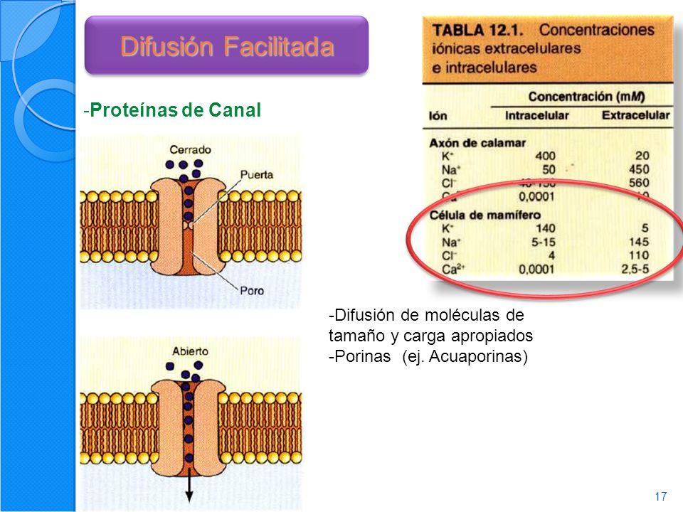 17 Difusión Facilitada -Proteínas de Canal -Difusión de moléculas de tamaño y carga apropiados -Porinas (ej.