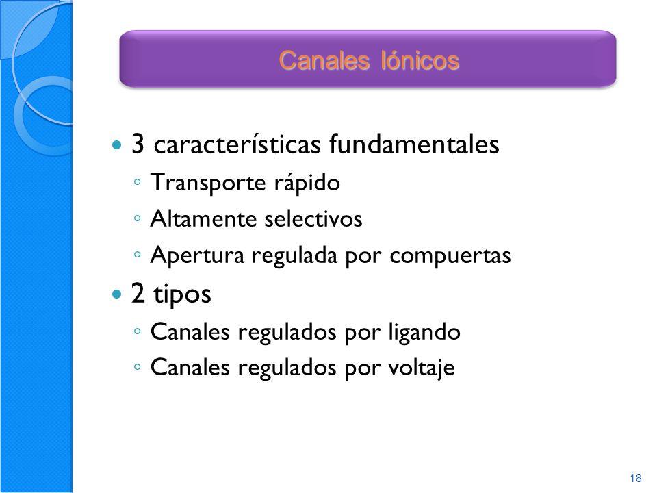 18 3 características fundamentales Transporte rápido Altamente selectivos Apertura regulada por compuertas 2 tipos Canales regulados por ligando Canales regulados por voltaje 18 Canales Iónicos