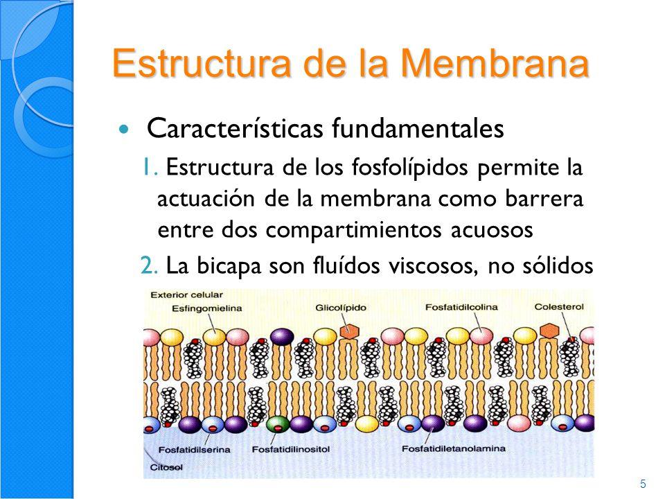 6 Proteínas de la Membrana Modelo de Mosaico Fluido -Periféricas -Integrales