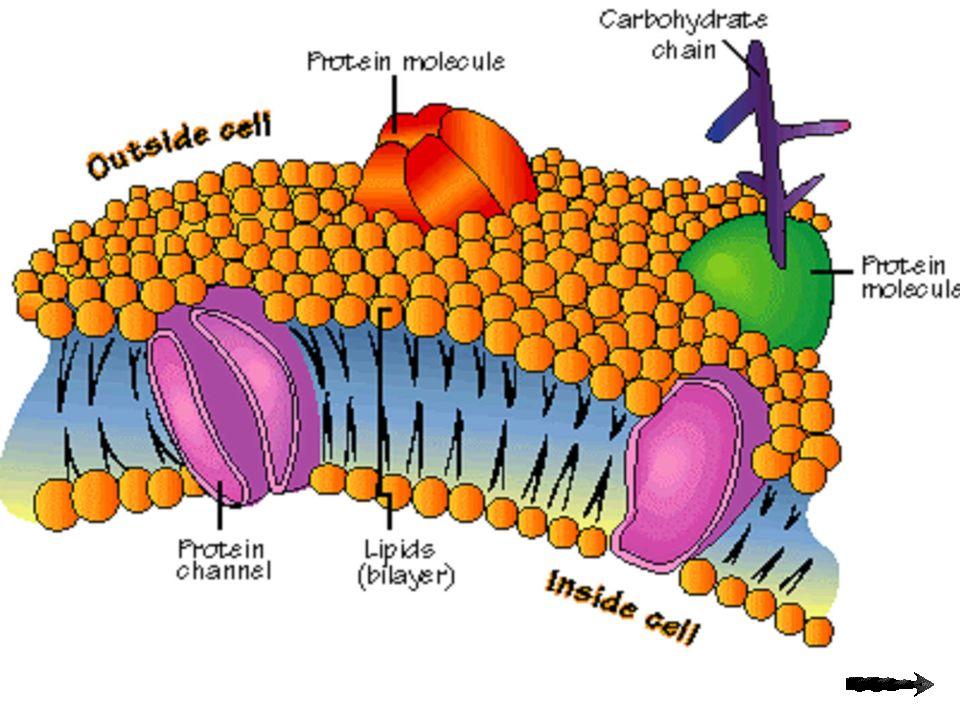 Los procesos de difusión en un líquido se producen a favor de gradiente de concentración.
