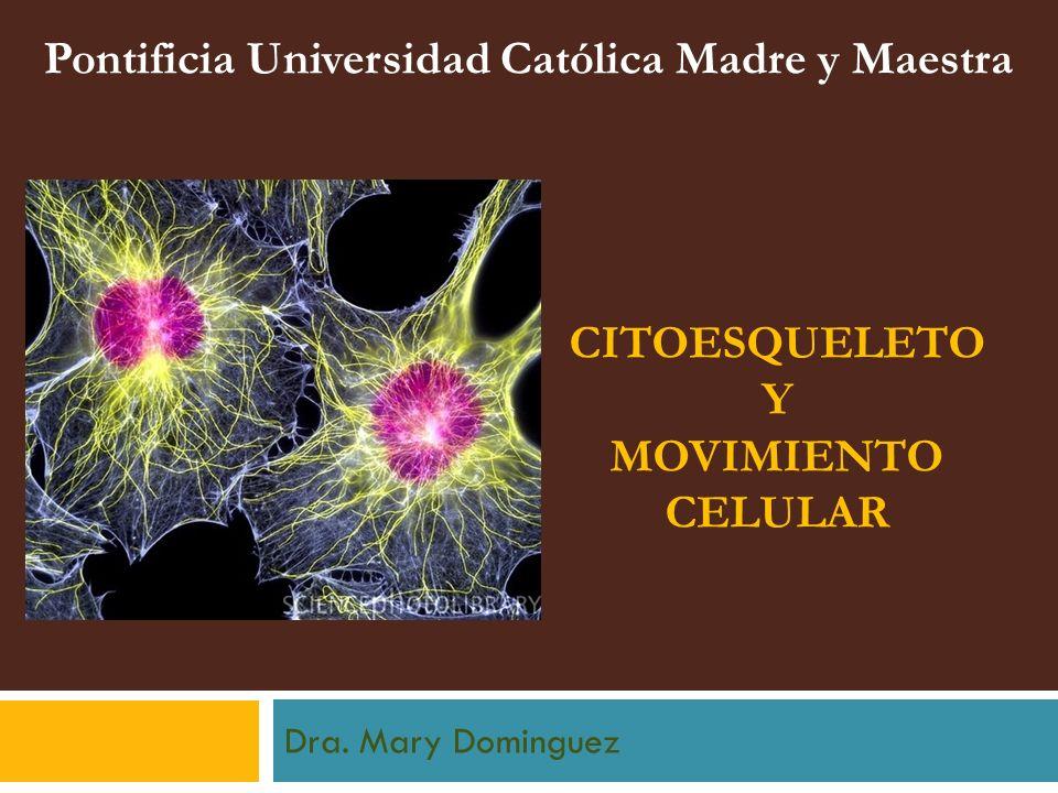 CITOESQUELETO Y MOVIMIENTO CELULAR Dra. Mary Dominguez Pontificia Universidad Católica Madre y Maestra