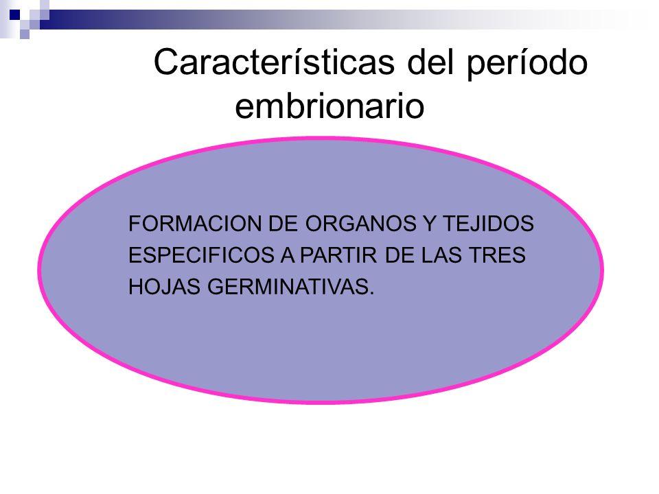 Características del período embrionario FORMACION DE ORGANOS Y TEJIDOS ESPECIFICOS A PARTIR DE LAS TRES HOJAS GERMINATIVAS.