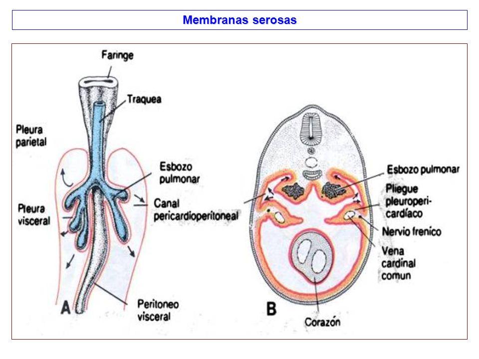 Membranas serosas