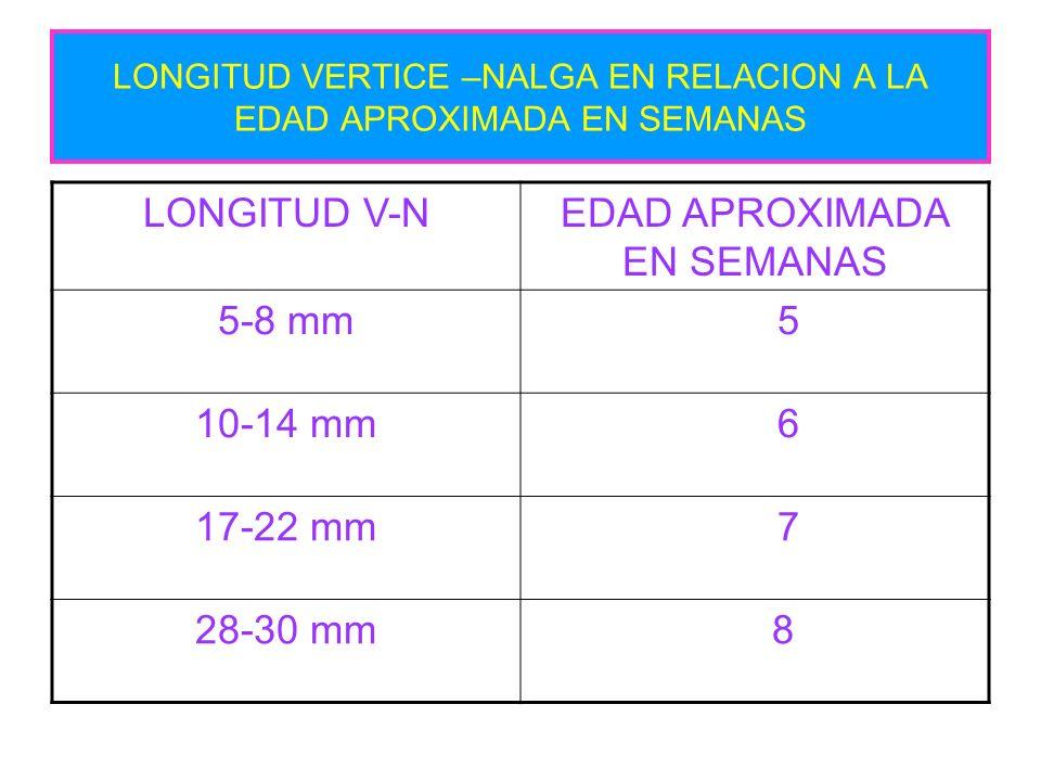 LONGITUD VERTICE –NALGA EN RELACION A LA EDAD APROXIMADA EN SEMANAS LONGITUD V-NEDAD APROXIMADA EN SEMANAS 5-8 mm 5 10-14 mm 6 17-22 mm 7 28-30 mm 8