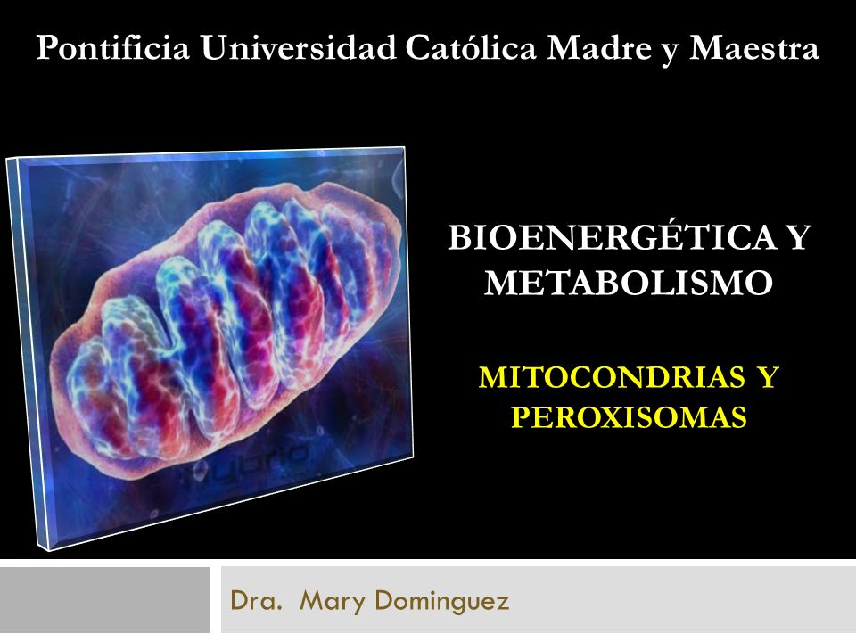 BIOENERGÉTICA Y METABOLISMO MITOCONDRIAS Y PEROXISOMAS Dra. Mary Dominguez Pontificia Universidad Católica Madre y Maestra